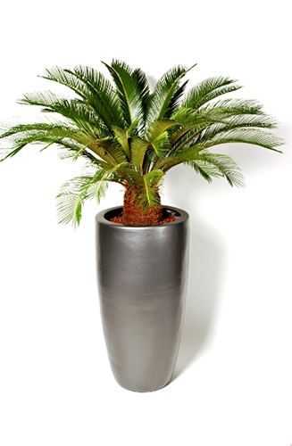 A range of corporate flowers and office flowers in London from Jungle World