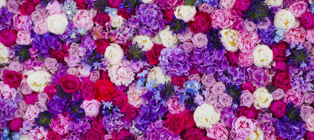 Wall Made of Roses - iStock_000056164686_Large