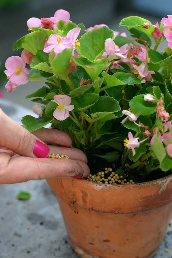 Fertilizing a Potted Plant iStock_000001836951_Small