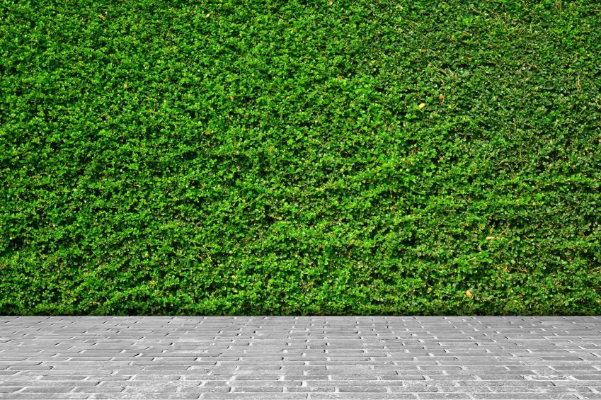 thick green plant wall for office iStock_000065368925_Small