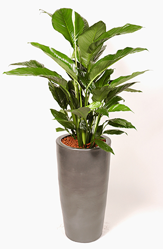 If Youu0027re Interested In Office Flowers Or Plants For Your Work Space, Then  Check Out The Range On Offer By Jungle World. We Supply Corporate And Office  ...