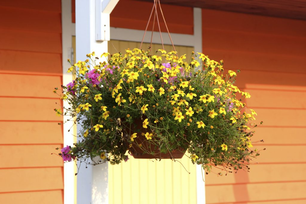 Hanging Basket - iStock_000006274834_Medium