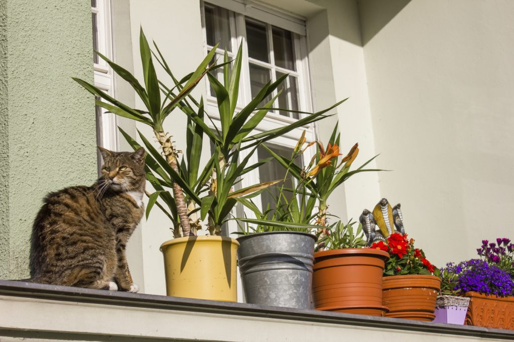 Plants on a Balcony - iStock_000068889177_Medium