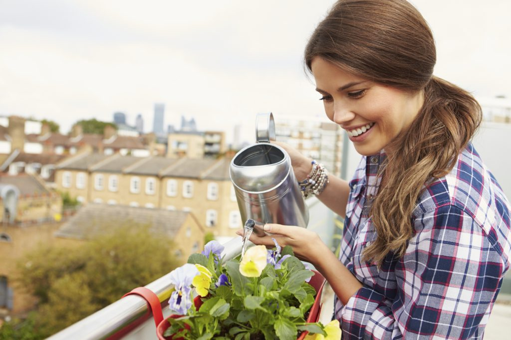 Woman Watering Plant In Container On Rooftop Garden