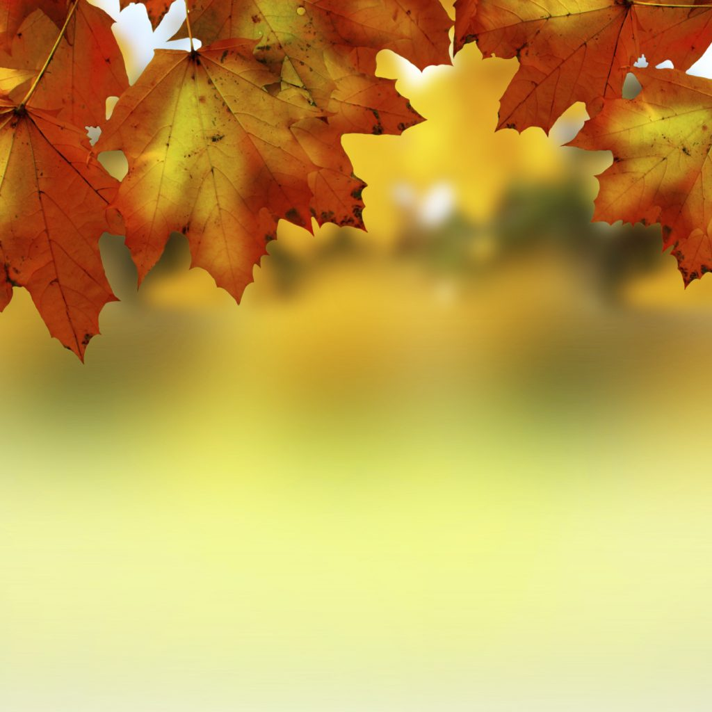 Autumn Leaves - iStock_000026238835_Medium