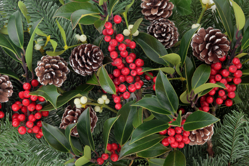 Winter and christmas background with red holly berriy clusters, mistletoe, spruce fir leaf sprigs and pine cones.