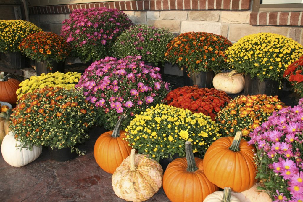 Fall pumpkins and flowers